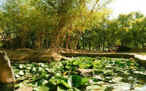 Nature-Walk-Olde-Bangalore-resort