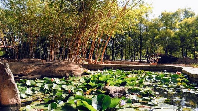 Nature Walk Olde Bangalore Resort Bengaluru