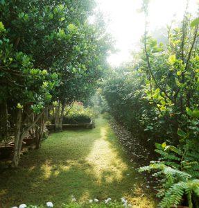 Bengaluru's-Greenest-and-Safest-Resort